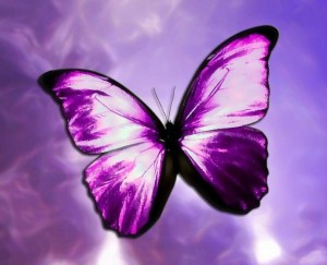 purple-butterfly-1
